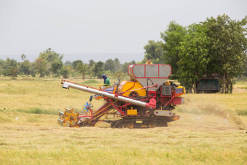 Working Harvesting Combine in the Field of rice