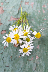 camomile flowers on wooden surface