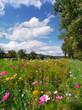 Blumenwiese am Kaiserstuhl