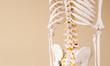Leinwandbild Motiv Skelett