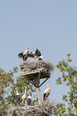 storks in their nests