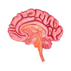 Brain Intersection