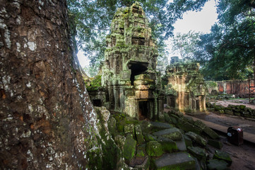 Ta Prohm temple with giant banyan tree at Angkor wat