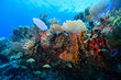 Leinwanddruck Bild - Colorful tropical coral reef in the caribbean sea
