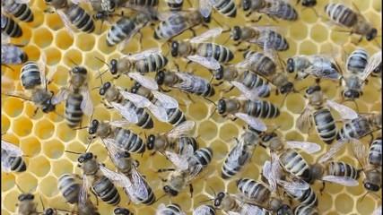 Работа пчел в улье