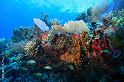 Tuinposter Koraalriffen Colorful tropical coral reef in the caribbean sea
