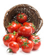 Tomatoes  in a basket is scattered