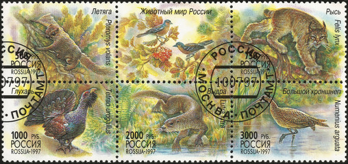 The animal world of Russia