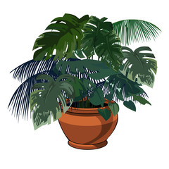 plants in pot