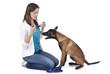 Frau legt Hund Halsband um isoliert