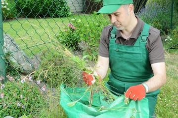 Gärtner zupft Unkraut im Garten