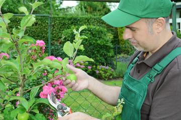 Gärtner bei Pflanzen-Pflege im Garten