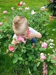 Junge genießt den Rosenduft