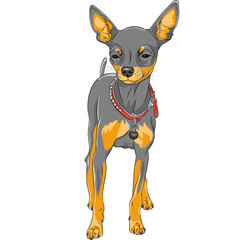 vector sketch dog Chihuahua breed