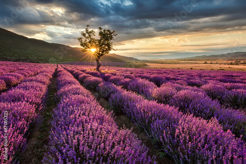 Fototapeta na wymiar Stunning landscape with lavender field at sunrise
