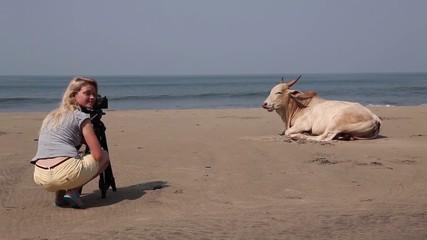 cow super model