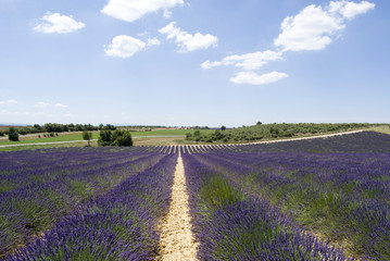 Plateau Valensole, South-eastern France