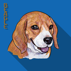 Beagle portrait with long shadow