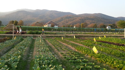 The organic farm in Chiangmai,northern of Thailand