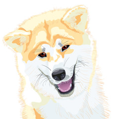 vector sketch dog Akita Inu Japanese breed smiles
