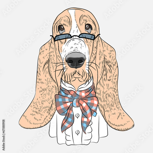 vector funny cartoon hipster dog Basset Hound - 67088908