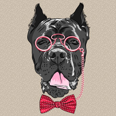 vector funny cartoon hipster dog Cane Corso