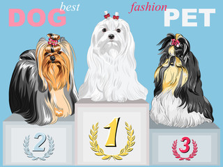 vector fashion dog champion on the podium