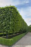 Fototapety Formal gardens