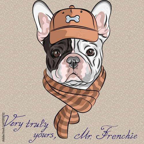 vector funny cartoon hipster dog  French Bulldog breed - 67092752