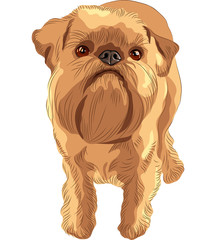 vector sketch red dog Brussels Griffon breed