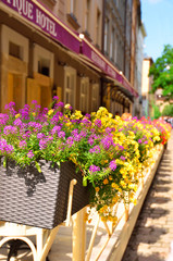 Street in Lvov decorated with flowers in flowerbeds