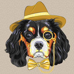 vector funny cartoon hipster dog King Charles Spaniel