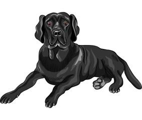 vector sketch dog breed black labrador retrievers