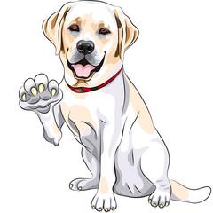 vector dog Labrador Retriever cheerful smiles and gives a paw