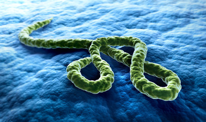 Ebola-Virus Illustration 3