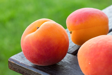 Ripe apricots arranged on a table, out of focus grass behind.