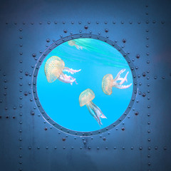 The jelly fish. Submarine window with view to sea.