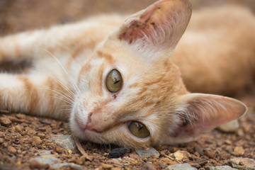 Cat lying on the ground and looking for you