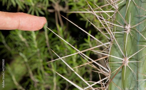 Cactus and finger, danger! - 67098161