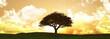 Widescreen sunset tree landscape - 67098977