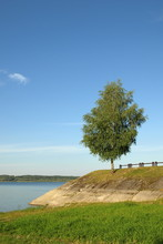 Tree on the bank of the lake