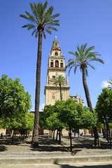 Patio de los Naranjos and the tower of the Cathedral of Cordoba.