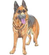 Vecteur couleur croquis chien berger allemand race