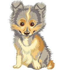 Vector puppy Shetland Sheepdog, Sheltie, Dog breed smile