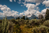 Meadow with Grand Tetons in the Distance