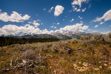 Field of Deadwood Approaching Tetons