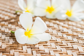 White plumeria flower on bamboo mat