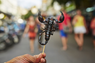 Roasted scorpion