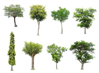 collection of tree on white background
