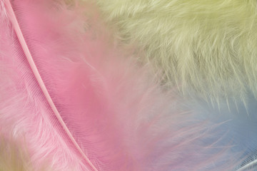 Blue pink and yelloww feather background, close up